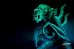 Aliens vs. Predators Experience Museum
